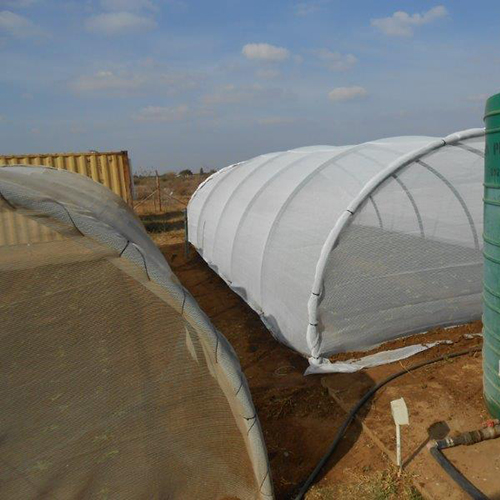 Covenant-Gardens-Estate-Vegetable-Tunnels---2-erected-5-planted-7-July-2015-66-