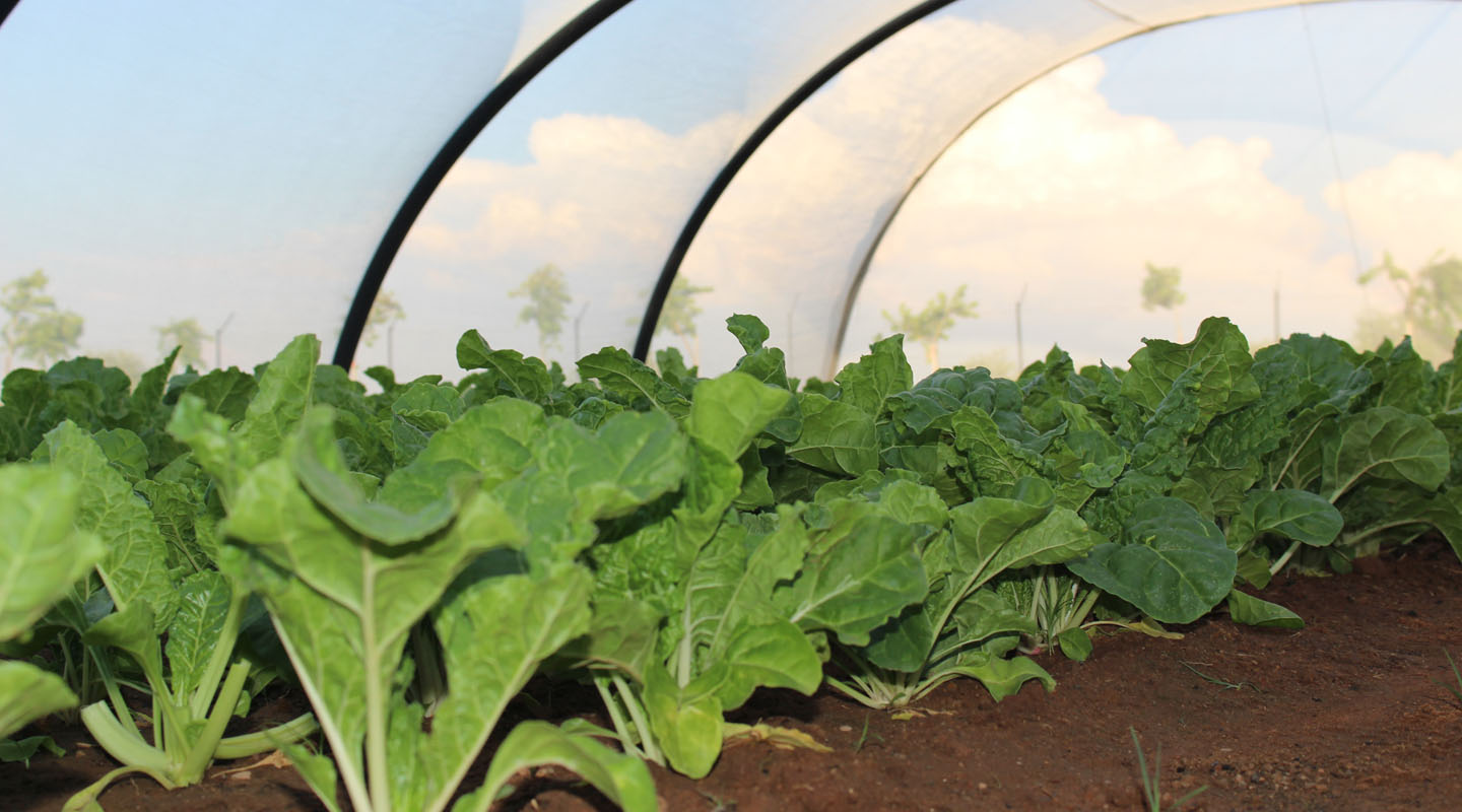 food-security-tunnel-gardens-1